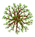 oak tree on top view isolated vector image vector image