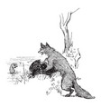 reynard the fox taunting bruin vintage vector image vector image