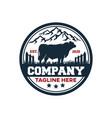 modern badge angus bull and farm logo vector image vector image