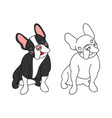 cute french bulldog vector image vector image