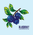 digital detailed color blueberry hand drawn vector image vector image