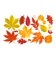 fall autumn leaves vector image vector image