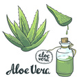 Natural Aloe vera isolated objects vector image