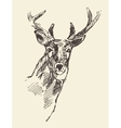 Deer head hand drawn sketch vector image vector image