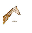 giraffe head sketch set vector image