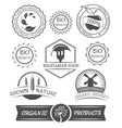 Set of organic badges and labels vector image vector image