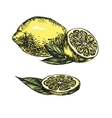 collections lemons hand drawn vector image