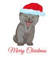 cool funny little kitten in santa hat flat vector image vector image