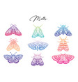 gradient collection of moth decorative style vector image