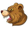 mascot head an roaring bear vector image vector image