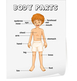 Body Parts Poster vector image