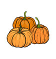 decorative orange pumpkins hand drawn sketch vector image