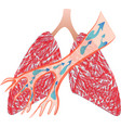 lungs and trachea vector image
