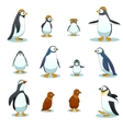 Penguins characters in various poses set vector image