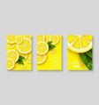 sliced lemon poster set vector image