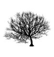black dry tree winter or autumn silhouette on vector image vector image