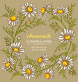 chamomile frame vector image vector image