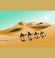 four camel riders are hiking in desert vector image