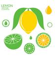 Lemon Lime vector image vector image
