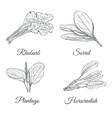 set of plants sketch vector image vector image