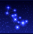 the constellation of the wolf in the night starry vector image