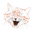 face red cat vector image
