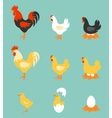 Colorful farm birds collection vector image vector image