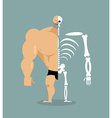 human structure Skeleton men construction of vector image vector image