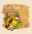 sketch poster exotic tropical fresh fruits vector image vector image