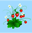 ripe red strawberry isolated on blue background vector image