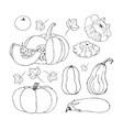 sketch pumpkin doodle pumpkins hand drawn vector image vector image