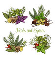 spices and herbs seasonings sketch vector image vector image