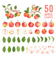 watercolor elements apple fruits leaves and vector image