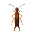 diplura insect pest control and extermination vector image vector image
