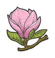 magnolia flower sketch vector image vector image