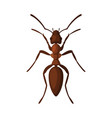 black gaarden ant pest control and extermination vector image