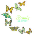 composition with butterflies vector image vector image