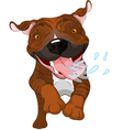 Excited brindle Pit Bull Dog vector image vector image
