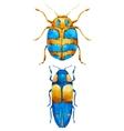 Watercolor bug beetle vector image