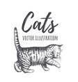 kitten walks vector image vector image