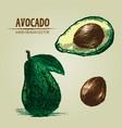 digital detailed color avocado hand drawn vector image