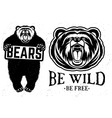 Bears logo vector image vector image