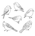birds outline set vintage collection of doodles vector image