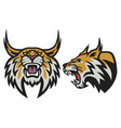 bobcat lynx wildcat angry roaring esports logo vector image vector image