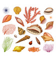 seashells set or mollusca different forms sea vector image