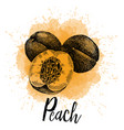 a peach in hand drawn vector image vector image