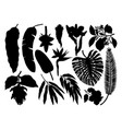 tropical plants exotic flowers citrus fruits palm vector image vector image