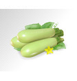 fresh vegetable marrow decorated with green leaf vector image vector image