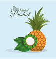 pineapple natural product quality vector image