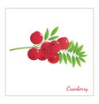 ranberry vector image vector image